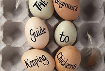 ~Raising Chickens~ / I love chickens sooooooooo much