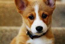 ~Cute Puppies~ / Love love LOVE puppies