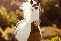 ~Majestic horses~ / So beautiful... So free...