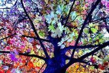 Trees Wonder