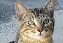 Cats :: Mi gato turbo / by sarai