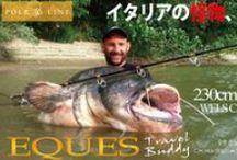 CATFISHING!!! / Catfishing world...