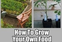Gardening of foods  / by Edward Van natta