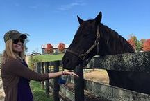 Kentucky Travels / From horses to Bourbon to caves and Corvettes, what to see and do in Kentucky.