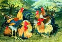 Charming Chickens / Photographs and Art Images of Charming Chickens,        for People Who Can't Help Loving Them / by Jenny Rainforest