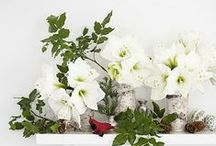 Winter Flowers & Arrangements