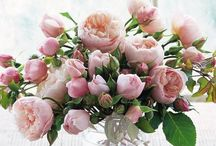 Summer Flowers & Arrangements