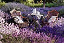 Lavender / Lavender Home and Decor