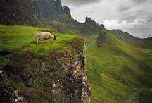 Great Scot!!! / by cassandra kelly