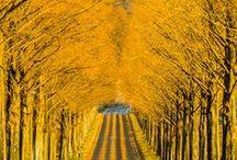 Jesień /  Autumn