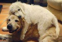 PETS / Pet ideas and cuteness.