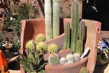 Gardens/Succulent / Suculentas