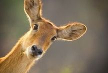 Drought & Animal Resistant Gardens / My codes: [d/r/d] = deer resistant, rabbit resistant, drought resistant. [ss] = self seeds.