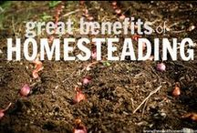 Off the Grid/Homesteading