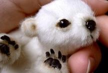 Too Cute / Super cute animals
