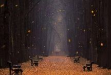 autumn / by virginia linzee
