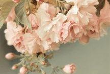º FLOWERS º