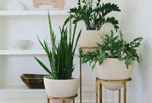 HOME // PLANTS