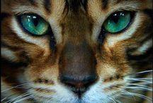 ❤️ Cats!