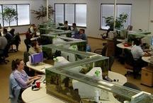 Office Environment / Good office environment