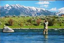 Montana / A board showcasing the beautiful sights and critters of Montana. / by Flathead Guide