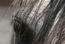 Horsemanship Education