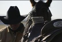 Sample Horsemanship Articles / A taste of some of the articles we publish in the Eclectic Horseman Magazine