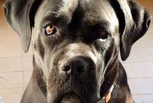 My Doggy - Xéna