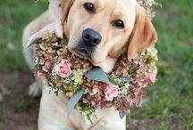 Wedding Pets we Love!