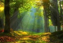 Magical Forests!
