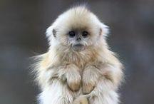 Des bébés singes