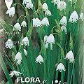 Garden flowers bulbs βολβοί