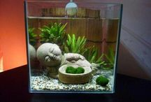 Plant   vegetation / Terrarium/Flower/Succulent/Marimo Moss Ball