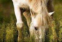 Animals / :)