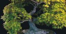 ☮☮Beauty in Bonsai Tree☮☮ / THESE LITTLE TREES ALWAYS SURPRISE ME