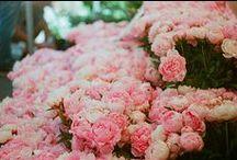 The flowers / by Hannah Bailey