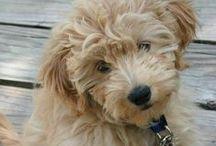 Puppy Love / Cutest ever