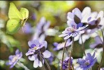 Cuz I love GREEN... and butterflies :) / Love, happiness, butterflies... :)