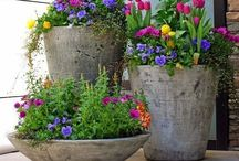 Flowers / by Lisa Fischer Jacobsmeyer