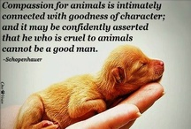 "Animals Make Us Better People / ""The greatness of a nation and its moral progress can be judged by the way its animals are treated."" - Mohandas Gandhi / by Cari Ennis"