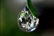 Water and Dew drops