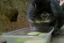 Bunny care.