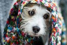Puppies!!!!!!! / by Sara Hoffman