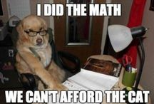 cann't afford the cat!