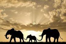 Elephants II ~ ♥♥ / by Marie