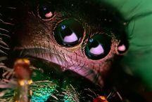 Animals' eyes