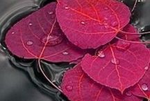 Kolory jesieni  - autumn