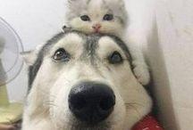 gatitos i perritos
