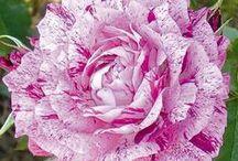 Flowers - kwiaty