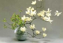 Centros e ikebana